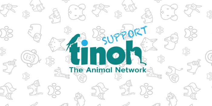 Tinoh Support